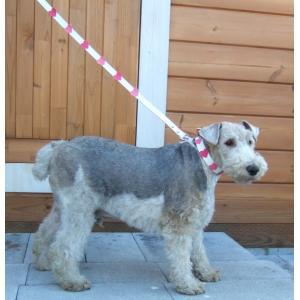 犬用 首輪 中大型犬用 フレッシュハートカラー首囲33-41cm|minnaegao