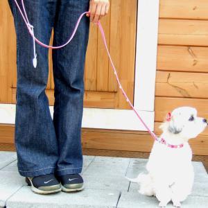 犬用 リード 小型犬用 フレッシュハートリード SS|minnaegao