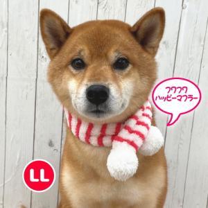 犬用 猫用 フワフワ ハッピーマフラー LL クリスマス パーティー イベント 写真撮影 おでかけ  ペット用 動物用|minnaegao