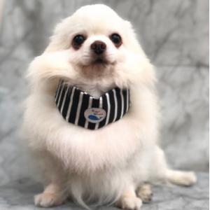 犬用 クールバンダナ 冷えひえボーダー ソフトジェル  4L  冷たい 涼しい 夏 保冷剤 接触冷感 消臭 メール便発送|minnaegao