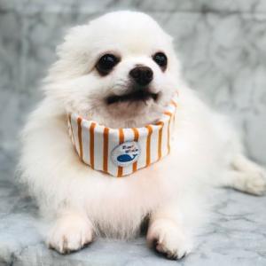犬用 クールバンダナ 冷えひえボーダー ソフトジェル  M  冷たい 涼しい 夏 保冷剤 接触冷感 消臭 メール便発送可|minnaegao