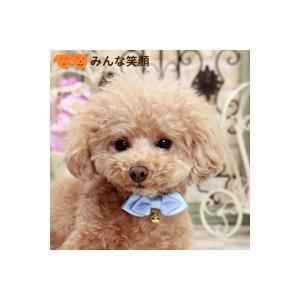 犬猫用  ネックレス 首輪  カラー PANOPLY  ルシアリボン ピンク  ブルー ベビーサイズ  メール便対応|minnaegao