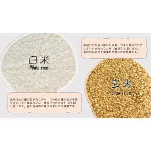新米 令和2年産 茨城県産 コシヒカリ うまい米 米専門 みのりや ポイント消化 送料無料|minoriya777|03