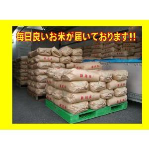 米 30kg お米 令和元年産 新潟県産 コシヒカリ うまい米 米専門 みのりや ポイント消化 送料無料|minoriya777|03