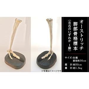 稀少!!オーストリッチ脚部骨格標本|misato-ostrich