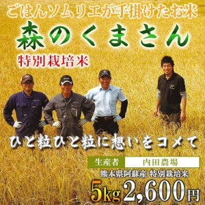 熊本 阿蘇 森のくまさん 5kg 内田農場 令和2年産 お米ソムリエが手掛けた米|mitinoekiaso