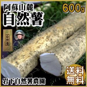 自然薯 山芋 道の駅 阿蘇 人気 第1位 600g  山菜の王者 岩下自然薯農園|mitinoekiaso