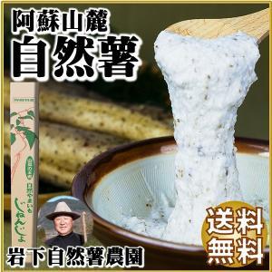 熊本 阿蘇 ギフト 自然薯 山芋 1.3kg 縁起もの 山菜の王者 岩下自然薯農園|mitinoekiaso