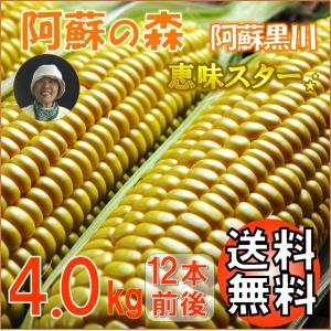 お中元 熊本 阿蘇 ギフト とうもろこし スイートコーン 阿蘇の森 恵味スター 4.0kg|mitinoekiaso