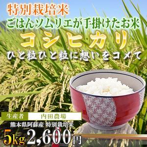 熊本 阿蘇 コシヒカリ 5kg 内田農場 令和2年産 お米ソムリエが手掛けた米|mitinoekiaso
