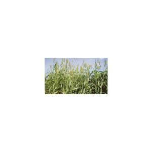 メーカー 雪印種苗・カネコ種苗・タキイ種苗(商品画像は雪印種苗のものです)