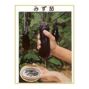 ナス種 みず茄(2000粒)