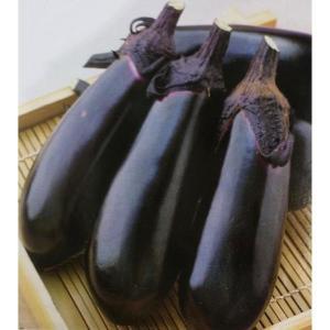 ナス種 千両二号(2000粒)