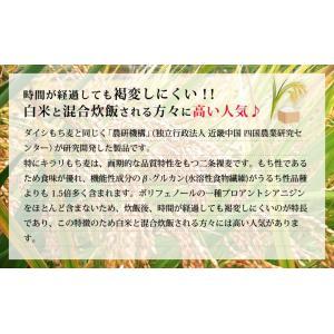 国産 キラリもち麦 1kg もち麦の新種の詳細画像2