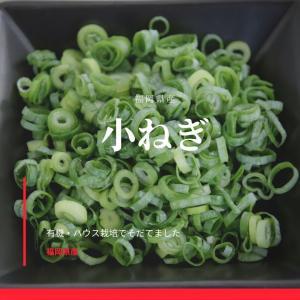 業務用カット小ネギ 福岡県産1kg