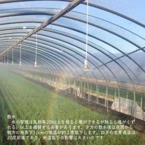 業務用カット小ネギ 福岡県産1kgの詳細画像4