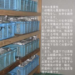 業務用カットねぎ 福岡県産1kg|mituyuki|08