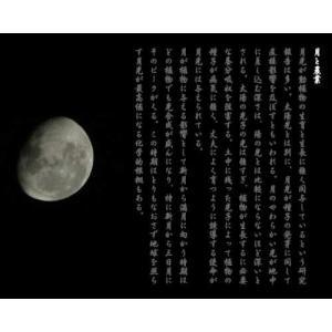 業務用カットねぎ 福岡県産1kg|mituyuki|10