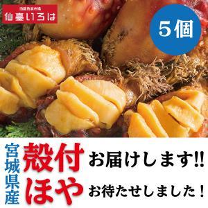 ほや 殻付き 5個 送料無料 生食用 新鮮 宮城県 三陸 ホヤ 毎週金曜発送 当週発送は水曜14時までの注文分 末永海産 お取り寄せ|miyagi-chisanchisho