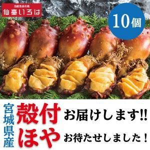 ほや 殻付き 10個 送料無料 生食用 新鮮 宮城県 三陸 ホヤ 毎週金曜発送 当週発送は水曜14時までの注文分 末永海産 お取り寄せ|miyagi-chisanchisho