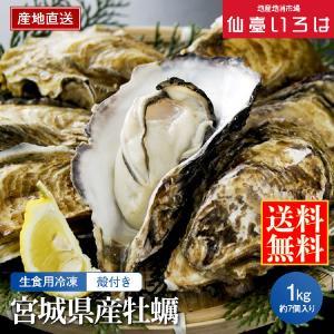 冷凍 殻付き牡蠣 1kg 宮城三陸産 生食用 宮城 アキコーポレーション 剥きたて カキ お取り寄せ miyagi-chisanchisho