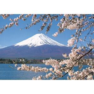 旅する日本【富士山と桜】絵はがき ポストカード|miyakobiyori