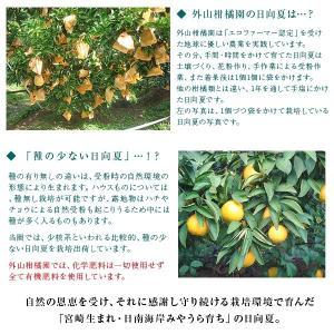 訳あり日向夏10kg(大小混合・無選果)ギフト 宮崎県日南海岸宮浦産 外山柑橘園 miyaura-ponkan 05