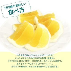 日向夏LL玉2.5kg(12玉)ギフト 宮崎県日南海岸宮浦産 外山柑橘園 miyaura-ponkan 04