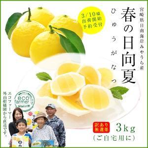 訳あり日向夏3kg(大小混合・無選果)ギフト 宮崎県日南海岸宮浦産 外山柑橘園|miyaura-ponkan