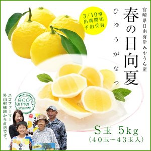 日向夏S玉5kg(40玉〜43玉)ギフト 宮崎県日南海岸宮浦産 外山柑橘園|miyaura-ponkan