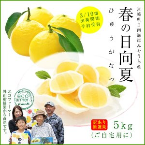 訳あり日向夏5kg(大小混合・無選果)宮崎県日南海岸宮浦産 ...