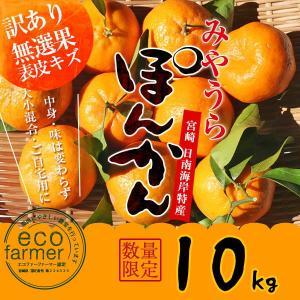 早期予約 訳あり みやうらポンカン10kg 12/10頃から順次出荷 宮崎県日南海岸宮浦産 外山柑橘園早期予約|miyaura-ponkan