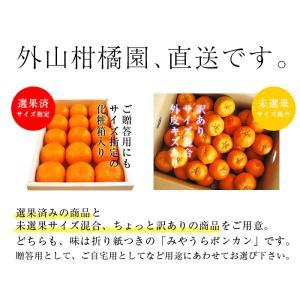 早期予約 みうらポンカン2.5kg 12玉LL 12/10頃から順次出荷 宮崎県日南海岸宮浦産 外山柑橘園|miyaura-ponkan|07