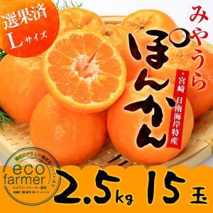 早期予約 みやうらポンカン2.5kg 15玉L 12/10頃から順次出荷 宮崎県日南海岸宮浦産 外山柑橘園|miyaura-ponkan