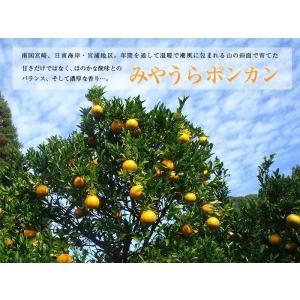早期予約 みやうらポンカン5kg 36玉M 12/10頃から順次出荷 宮崎県日南海岸宮浦産 外山柑橘園|miyaura-ponkan|06