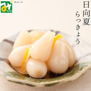 らっきょう 漬物 甘酢漬 日向夏 霧島 日向夏らっきょう 霧島食品工業|miyazakikonne