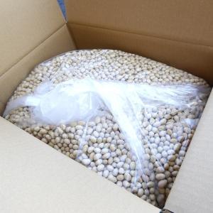 福豆・バラ 10キロ 国産 節分福豆 代引き・振込不可|mizota
