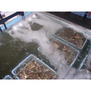 溶存酸素の改善!水産、養殖、水耕栽培、ガス病対策、アクアリウムなど F.BT-50S 代引き手数料無料|mizukaplanningec|04