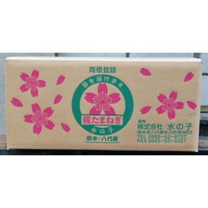 【送料無料】水の子会の桜たまねぎ(5kg) 5月29日出荷が最終となります。|mizunokokai|02