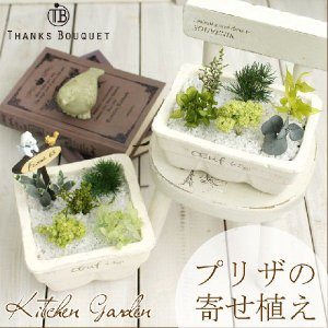 インテリアグリーン 観葉植物 インテリア 雑貨 おしゃれ ギフト 誕生日 プレゼント 女性 プリザーブドグリーン 寄せ植え キッチンガーデン|mizutomo