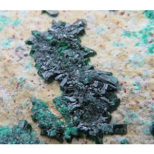 15481 【鉱物標本】 アタカマ石 母岩付き結晶 展示用に最適 1967年採集 Sierra Gorda チリ産 : 瑞浪鉱物展示館 【送料無料】|mm-museum