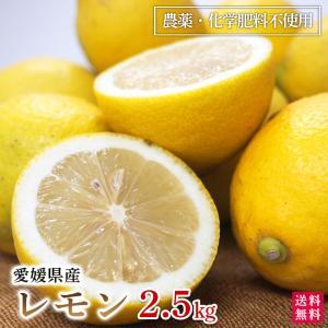 レモン3kg 愛媛産 A品 国産 農薬・化学肥料不使用 送料無料|moa