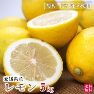 レモン5kg 愛媛産 A品 国産 農薬・化学肥料不使用 送料無料|moa