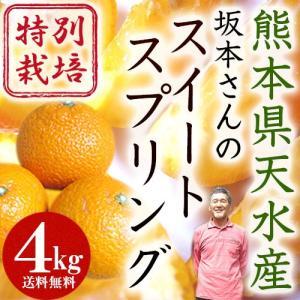 熊本県天水産 特別栽培 スイートスプリング4kg【送料無料】|moa