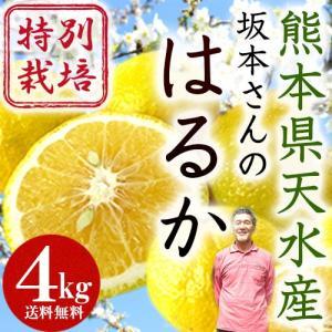 熊本県天水産 特別栽培 はるか4kg【送料無料】|moa