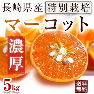 長崎県産マーコット5kg【送料無料】