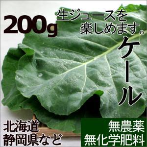 ケールの「生葉」!新鮮な生ジュースをお楽しみください。 「ケール・500g9〜12枚程度」