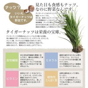 タイガーナッツ 皮なし 大容量500g (チュハ/chufa/カヤツリグサ塊茎/けいこん)|mobile-garage1|02