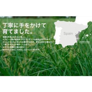 タイガーナッツ 皮なし 大容量500g (チュハ/chufa/カヤツリグサ塊茎/けいこん)|mobile-garage1|04