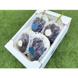 ぶどう ニューピオーネ 約1.8kg(3~4房) 送料無料 岡山県産 おかやま 葡萄 ブドウ 巨峰 momodu-store